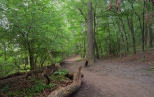 High park trails