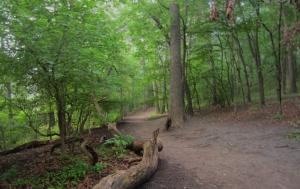 High park trails